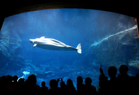 水中写真「People Visit The Georgia Aquarium」:写真・画像(11)[壁紙.com]