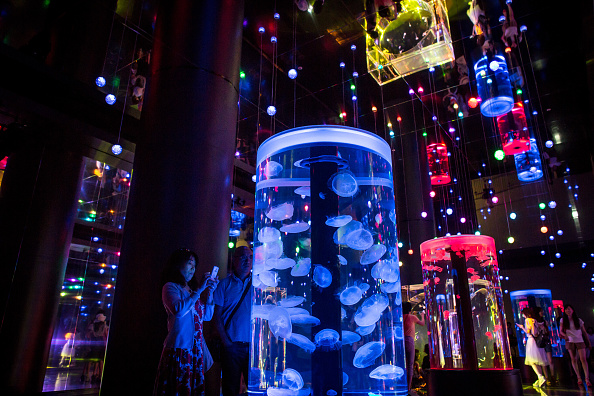 くらげ 日本「Neons And Jellyfish Attract Tokyoites To High-tech Aquarium」:写真・画像(1)[壁紙.com]