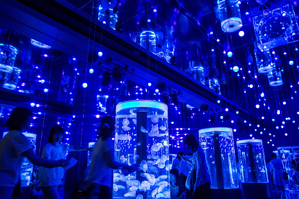 Jellyfish  Japan「Neons And Jellyfish Attract Tokyoites To High-tech Aquarium」:写真・画像(7)[壁紙.com]