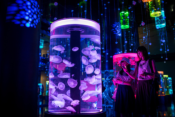 くらげ 日本「Neons And Jellyfish Attract Tokyoites To High-tech Aquarium」:写真・画像(0)[壁紙.com]