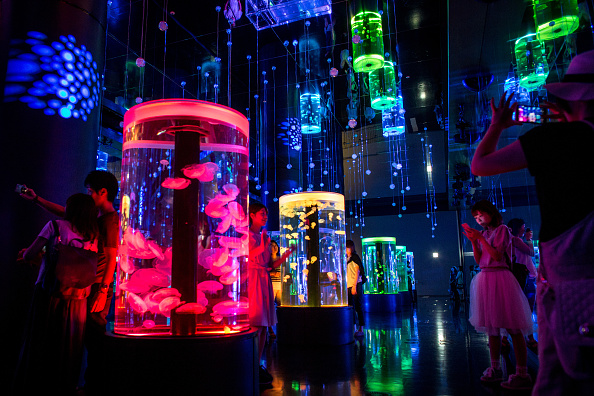 くらげ 日本「Neons And Jellyfish Attract Tokyoites To High-tech Aquarium」:写真・画像(3)[壁紙.com]