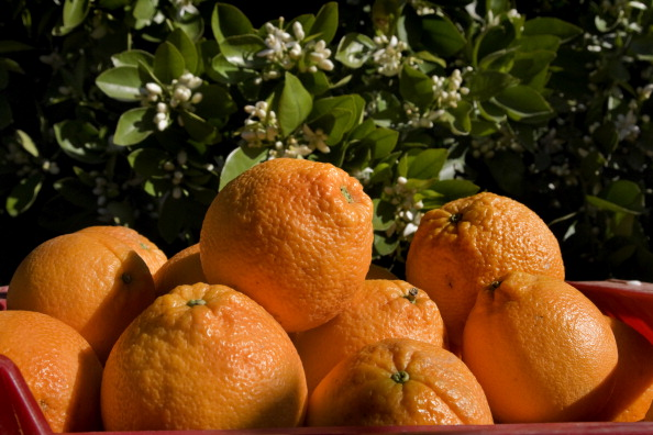 Orange - Fruit「Valencia, Spain」:写真・画像(1)[壁紙.com]