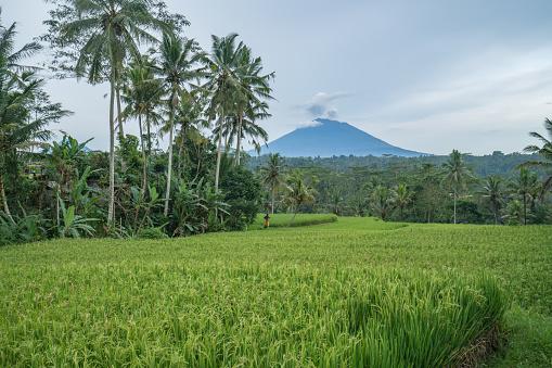 Mt Agung「インドネシア ・ バリ島ウブド近くアグン火山と米田んぼ」:スマホ壁紙(4)