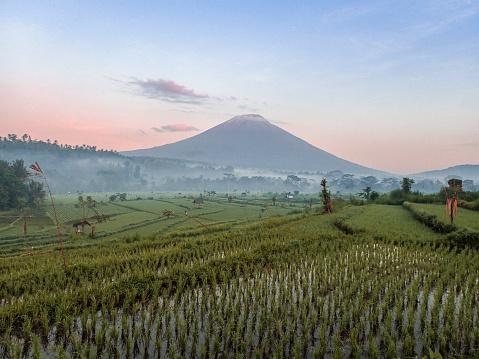 Mt Agung「Mount Agung, Candidasa, Bali with rice paddies」:スマホ壁紙(12)