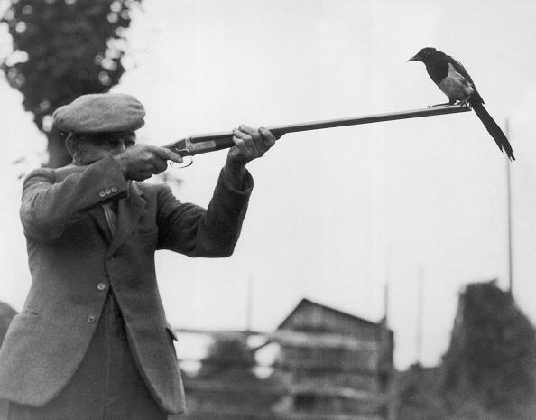 Perching「Watch The Birdie」:写真・画像(5)[壁紙.com]