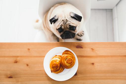 Danish Culture「Cute dog waiting for the dinner with tasty buns」:スマホ壁紙(9)
