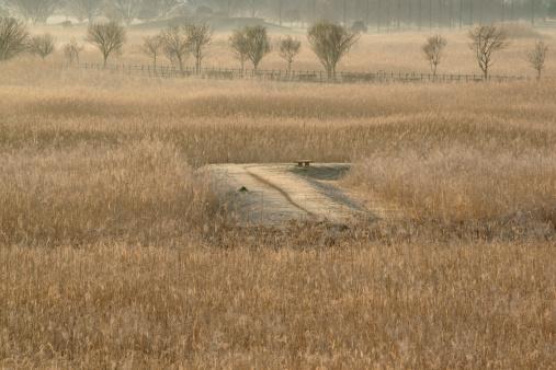 すすき「Japanese silver grass field and dirt road, Tochigi Prefecture, Honshu, Japan」:スマホ壁紙(13)