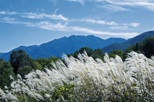 すすき「Japanese Silver Grass in Mountain」:スマホ壁紙(19)