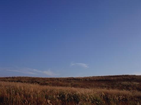 すすき「Japanese silver grass, Kirigamine, Nagano Prefecture, Japan」:スマホ壁紙(19)