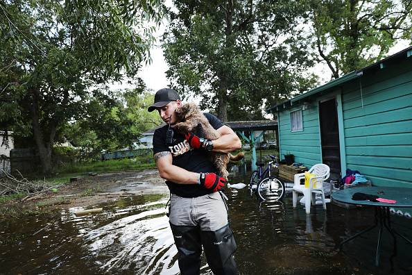 動物「Floods Hinder Recovery Efforts In Southeast Texas」:写真・画像(6)[壁紙.com]