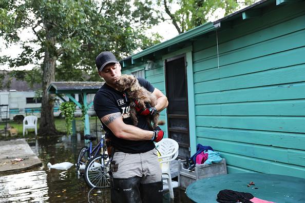 動物「Floods Hinder Recovery Efforts In Southeast Texas」:写真・画像(11)[壁紙.com]