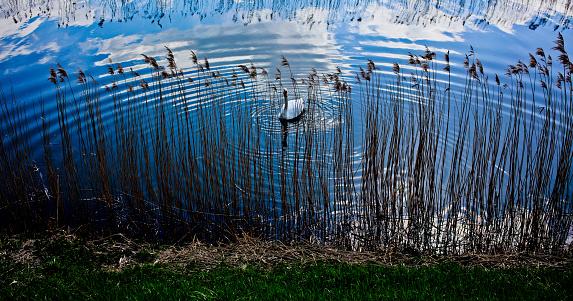 マン島「Swan in the Ramsey 40」:スマホ壁紙(5)