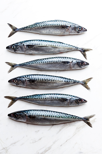 Fish「Row of six sardines on white marble」:スマホ壁紙(5)