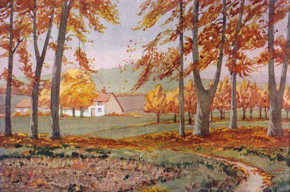 葉・植物「Autumn - The Physical」:写真・画像(10)[壁紙.com]