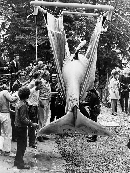 Killer Whale「A Whale Sling」:写真・画像(18)[壁紙.com]