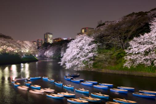 夜桜「Boats in moat lined with cherry blossom trees」:スマホ壁紙(12)
