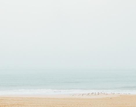 Birds「Montauk Beach」:スマホ壁紙(11)