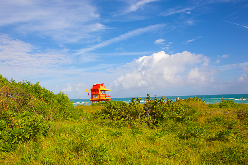 Miami Beach「Lifeguard stand atop sea grapes, Miami Beach, FL」:スマホ壁紙(18)