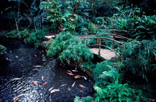 Carp「A bridge over a goldfish pond surrounded by foliage」:スマホ壁紙(9)