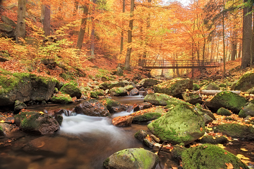 European Alps「Bridge over Stream in Forest at autumn - Nationalpark Harz」:スマホ壁紙(11)