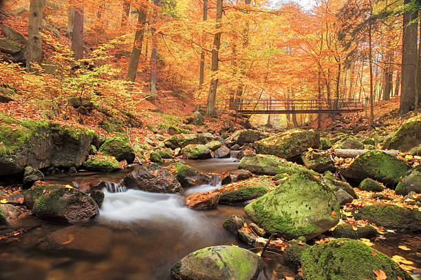 Bridge over Stream in Forest at autumn - Nationalpark Harz:スマホ壁紙(壁紙.com)