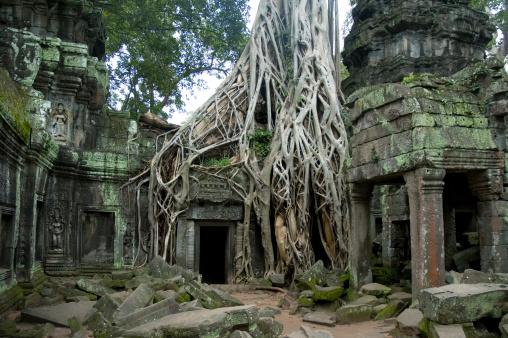 Natural Landmark「Ancient Angkorian Ruins Of Ta Prohm In The Jungle, Cambodia」:スマホ壁紙(16)