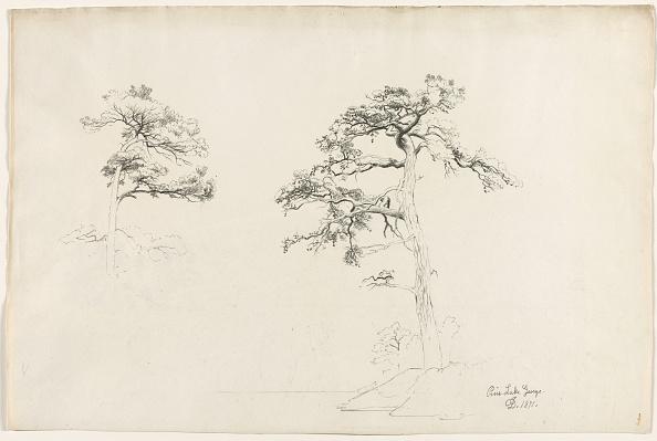 Pencil「Pine」:写真・画像(0)[壁紙.com]