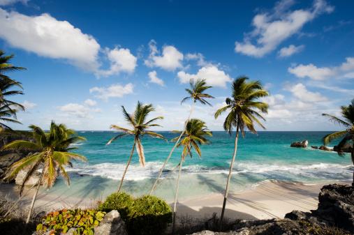Barbados「Harrismith Beach and Palm Trees on Barbados」:スマホ壁紙(8)