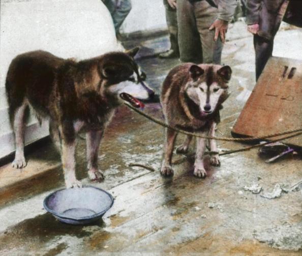 Dogsledding「Sledge dogs aboard of the Fram. Fridtjof Nansen North Pole expedition. Hand-colored lantern slide. Around 1894」:写真・画像(4)[壁紙.com]