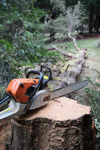 Blade「Chainsaw on tree stump」:スマホ壁紙(19)
