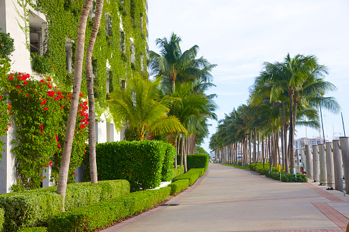 Miami Beach「Walkway by intracoastal, Miami Beach, Florida」:スマホ壁紙(13)