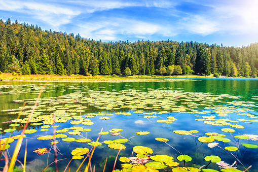 Auvergne-Rhône-Alpes「Wonderful small altitude french Genin lake in middle of wild pine forest in summer in Jura mountains」:スマホ壁紙(2)