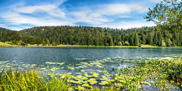 Wonderful small altitude french Genin lake in middle of wild pine forest in summer in Jura mountains:スマホ壁紙(壁紙.com)