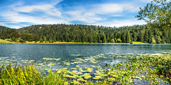 Auvergne-Rhône-Alpes「Wonderful small altitude french Genin lake in middle of wild pine forest in summer in Jura mountains」:スマホ壁紙(1)