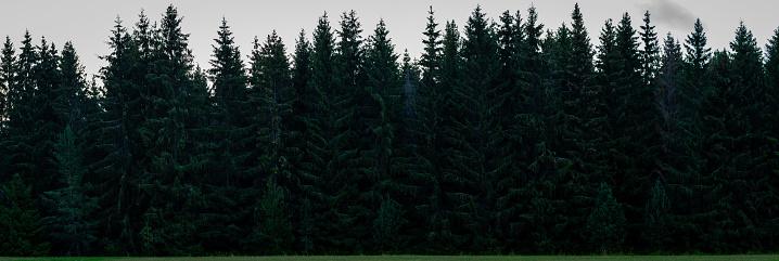 Threats「Dense spruce forest」:スマホ壁紙(4)