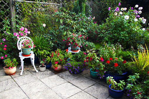 コスモス「October English garden still full of flowers.」:スマホ壁紙(12)