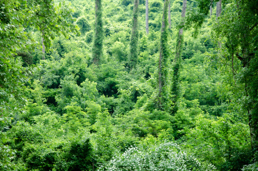 International Biosphere Reserves「jungle」:スマホ壁紙(17)