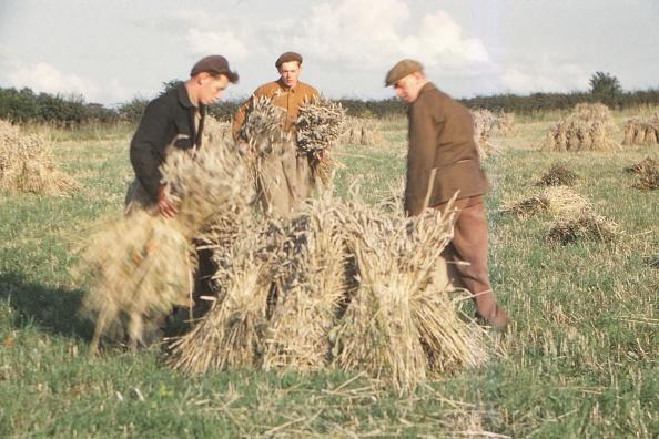 Harvesting「Stooking Corn Wheat In August」:写真・画像(17)[壁紙.com]