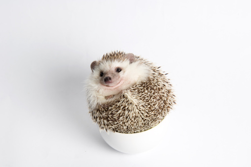 Hedgehog「Roll Up Hedgehog」:スマホ壁紙(0)