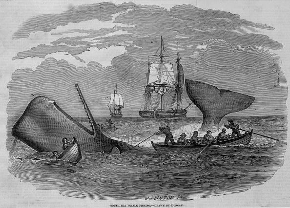Whale「Whale Hunting」:写真・画像(9)[壁紙.com]