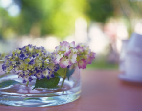 あじさい「Hydrangea in Flat Vase, Close Up, Differential Focus, In Focus, Out Focus」:スマホ壁紙(9)