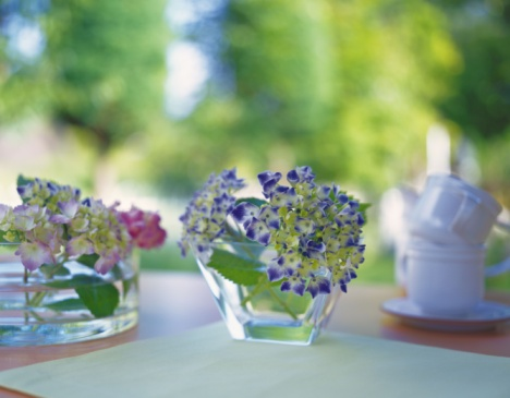 アジサイ「Hydrangea in Vase, Front View, Close Up, Differential Focus, In Focus, Out Focus」:スマホ壁紙(4)