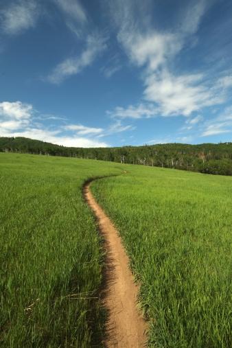 一本道「Singletrack trail running thru mountain meadow」:スマホ壁紙(18)