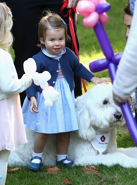 animal「2016 Royal Tour To Canada Of The Duke And Duchess Of Cambridge - Victoria」:写真・画像(14)[壁紙.com]
