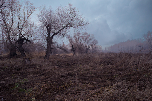 Branch - Plant Part「Spooky dark and old forest」:スマホ壁紙(0)