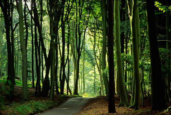 Footpath「Beechwoods, Marlow, Buckinghamshire, UK」:写真・画像(1)[壁紙.com]