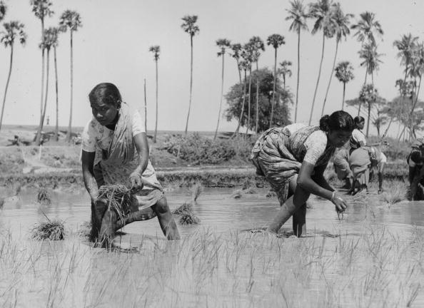 Sowing「Women In Rice Field」:写真・画像(10)[壁紙.com]