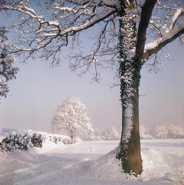 雪「Snow Fall」:写真・画像(12)[壁紙.com]