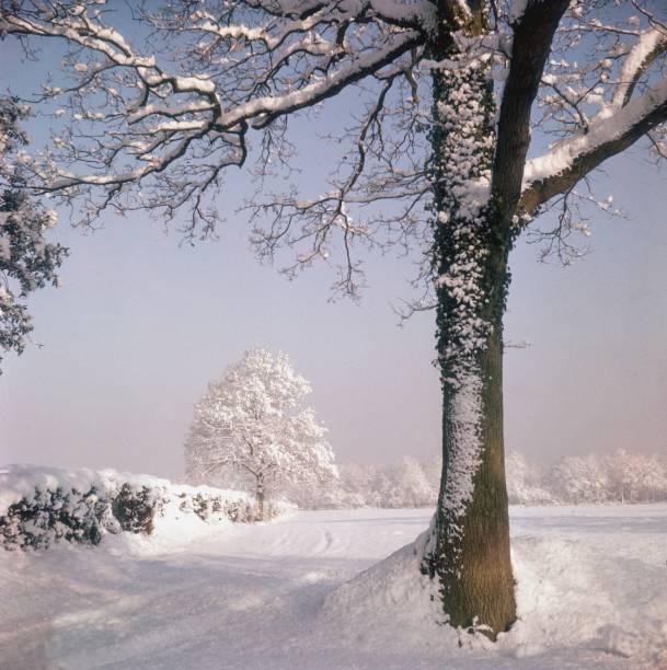 Snow Fall:ニュース(壁紙.com)