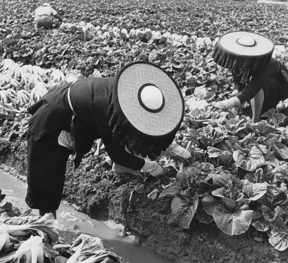 Cabbage「Cabbage Cutters」:写真・画像(18)[壁紙.com]